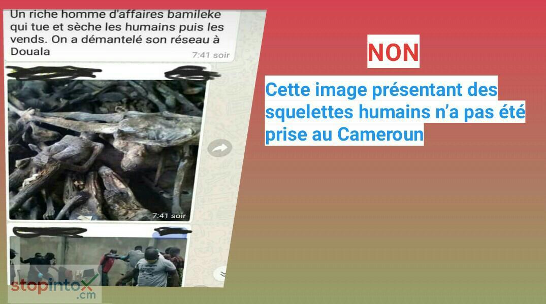 Non, cette image présentant des squelettes humains n'a pas été prise au Cameroun