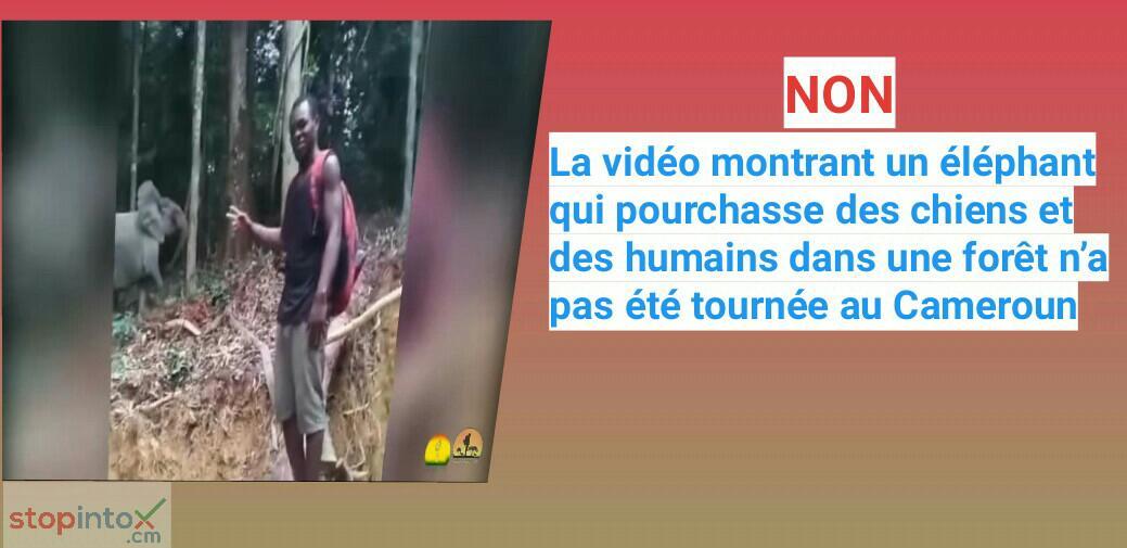Non, la vidéo montrant un éléphant qui pourchasse des chiens et des humains dans une forêt n'a pas été tournée au Cameroun
